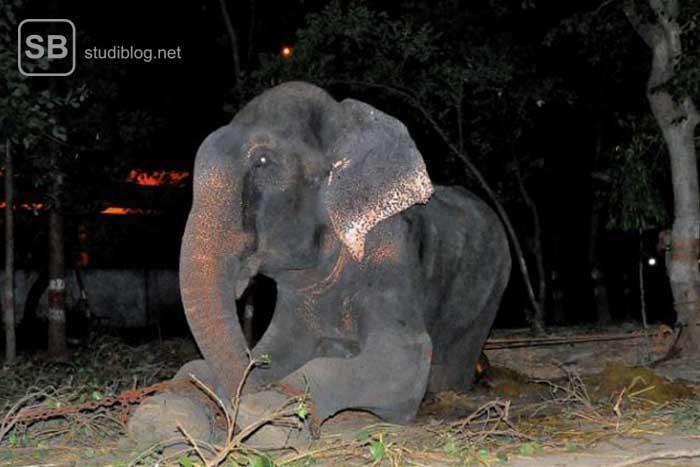 Ein geretteter Elefant
