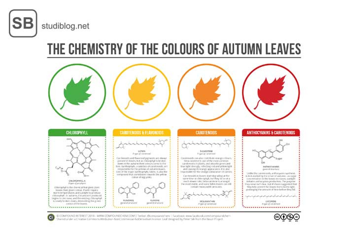 Die Chemie der Farben der Blätter erklärt