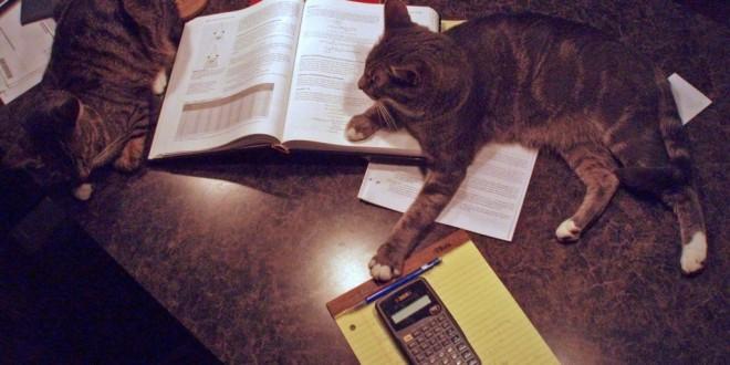 Jeder Student in der Prüfungsphase: Katzen auf dem Bett mit Büchern und einem Taschenrechner