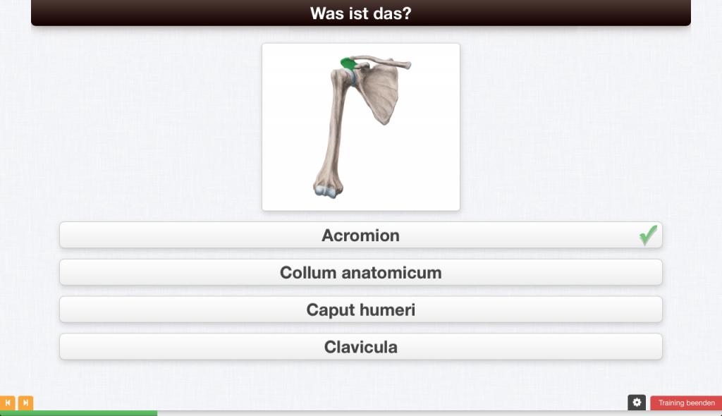 Mit Kenhub Anatomie online lernen - Ein Erfahrungsbericht