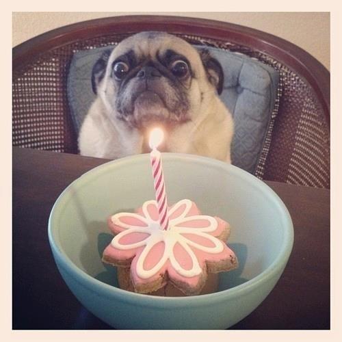Wenn Möpse Keine Geburtstagsfeier Mögen Studiblog