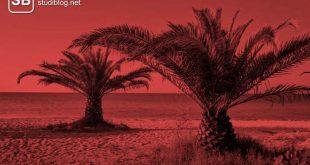Ferien während dem Studium nutzen, Palmen im roten Licht