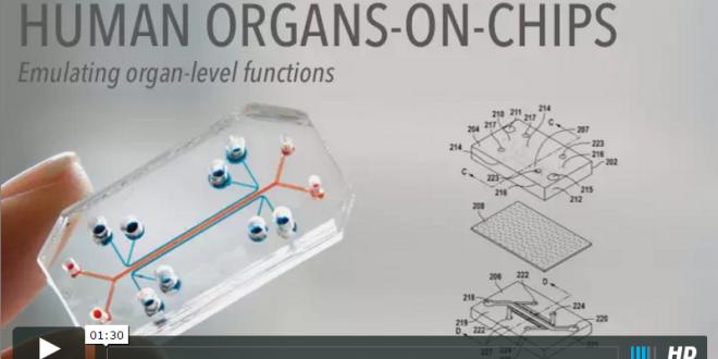 Menschliche Organe auf einem Microchip: Video vom Wyss Institute zu organs-on-chips