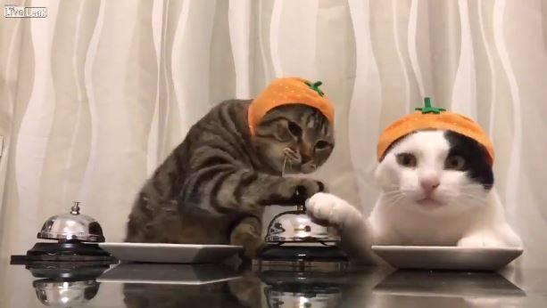 Katze läutet Glocke und bekommt Fressen