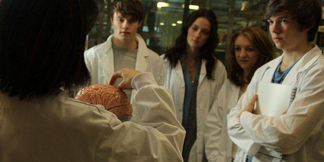 Gruppe von vier Medizinstudenten steht vor einer Dozentin, die das Gehirn erklärt - Merksprüche zum Lernen der Anatomie