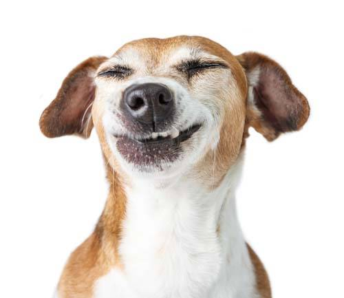 Grinsender Hund