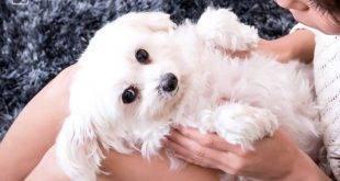 Hunde sind der Menschen beste Freunde - das Streicheln kann sogar Stress abbauen