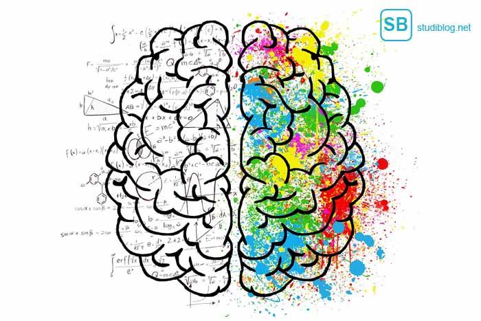 Ein Hirngrafik mit aktiver rechter und inaktiver linker Hälfte zum Thema Konzentration steigern beim Lernen - Tipps von StudiBlog