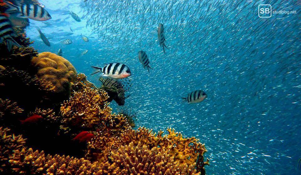 Auslandssemester in Australien: Fische und Unterwasserwelt am Great Barrier Reef