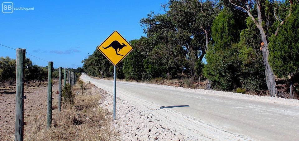Auslandssemester in Australien: Känguru-Warnschild
