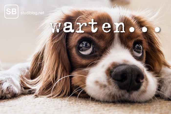 Hund liegt auf dem Boden und schaut nach oben zum Thema Warten