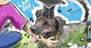 Einen Hund als Tier / Pet während dem Studium halten?