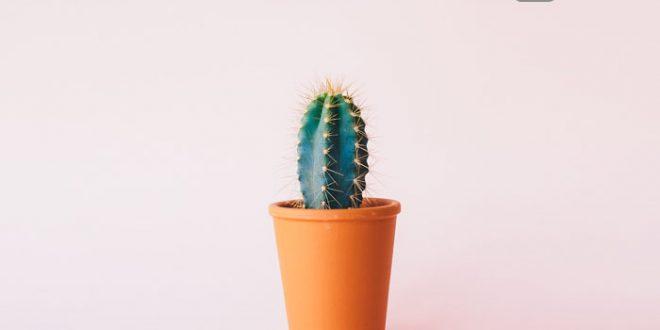 Ein kleiner grüner Kaktus zum Thema Die Studentenbude – das Survival Camp der Pflanzen